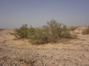 Desert Castle 4