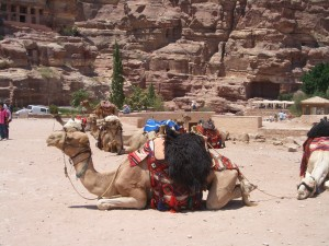 Camel as Transport in Petra