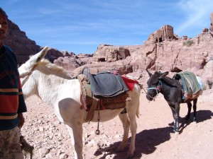 Donkeys in Petra
