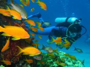 Red Sea Aqaba Diving